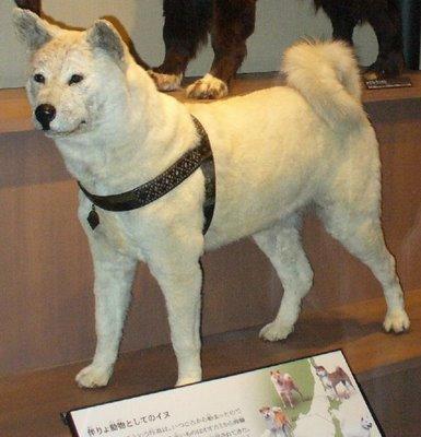 Hachiko Museum